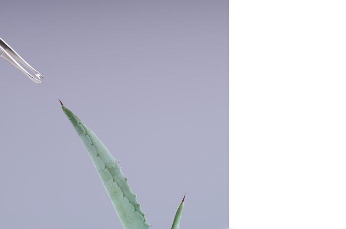 Fotografie-pro-interier-Empty Aloe 01