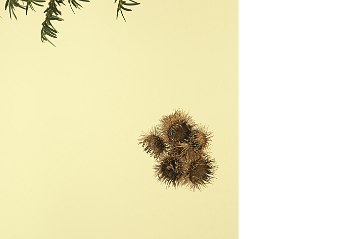 Fotografie-pro-interier-Forest-02