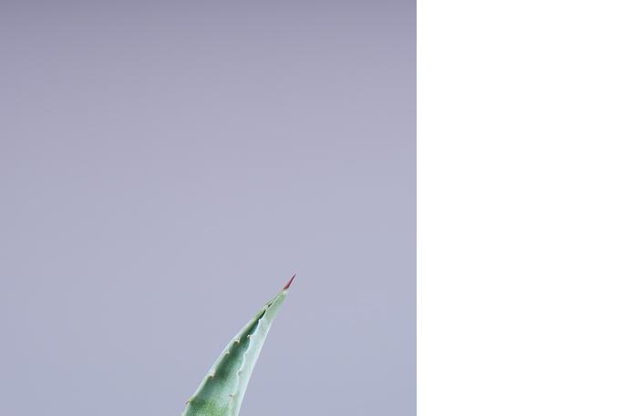 fotografie-pro-interier-Empty Aloe 02