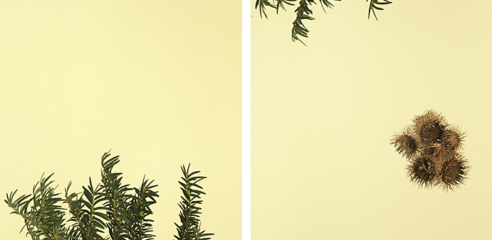 fotografie-pro-interier-Forest 01-02