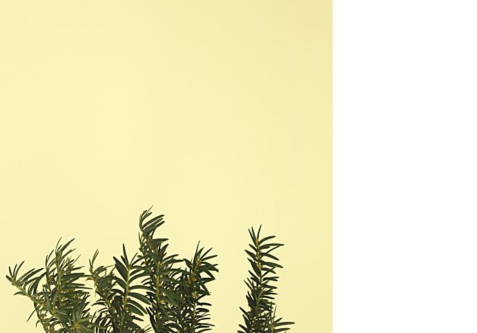 fotografie-pro-interier-Forest-01