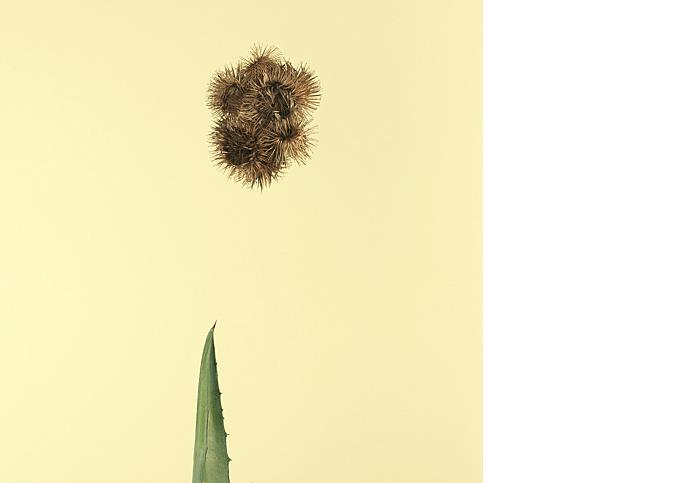fotografie-pro-interier-Forest-03