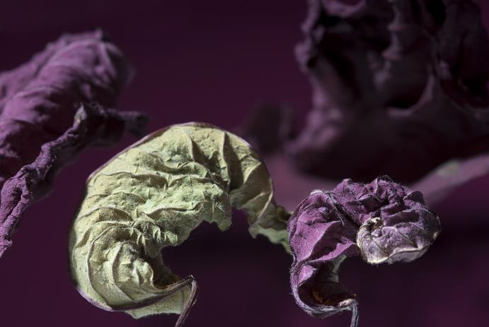 fotografie-pro-interier-Dark-Garden-01