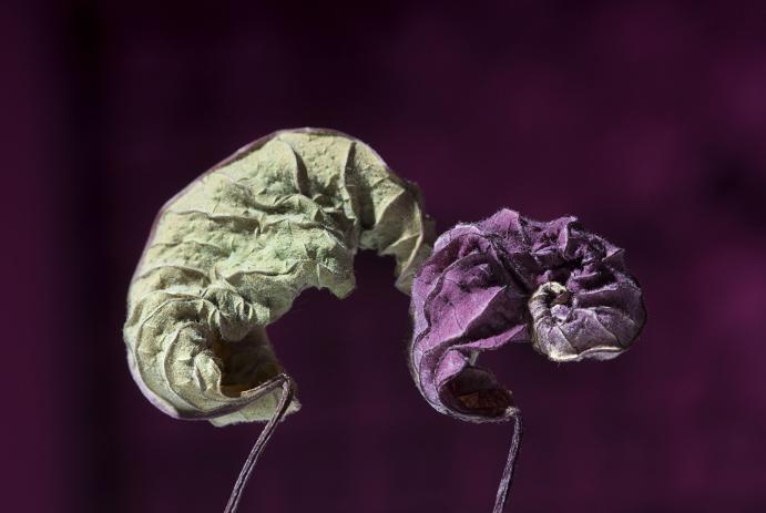 fotografie-pro-interier-Dark-Garden-02