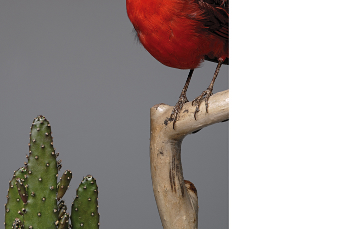 fotografie-pro-interier-Empty-Bird-01